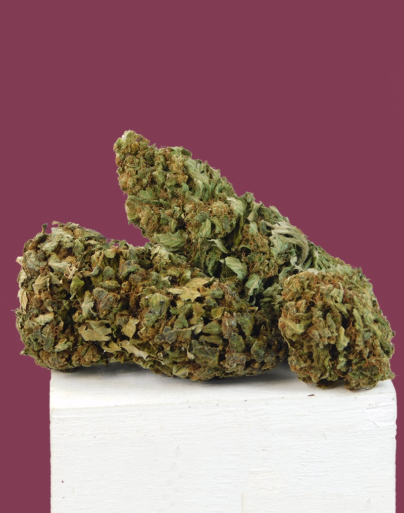 Buying with a CBD wholesaler (grossista CBD), people enjoy great prices